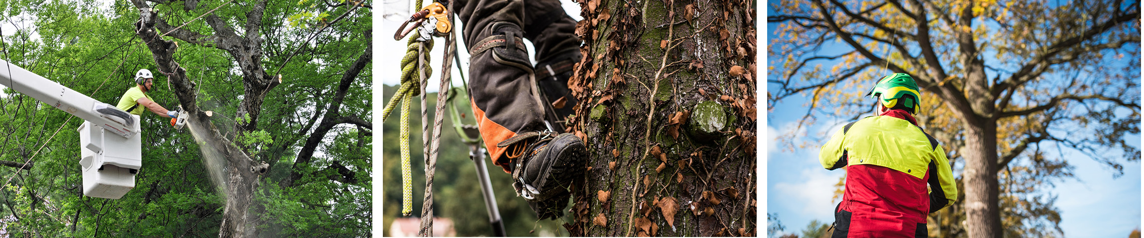 Tree workers