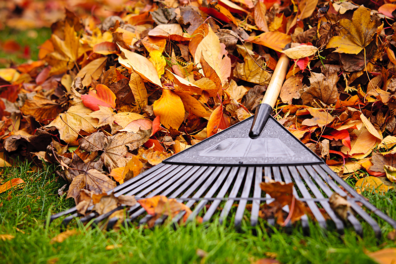fall leaves and a rake on a lawn