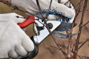 hands pruning branch outside