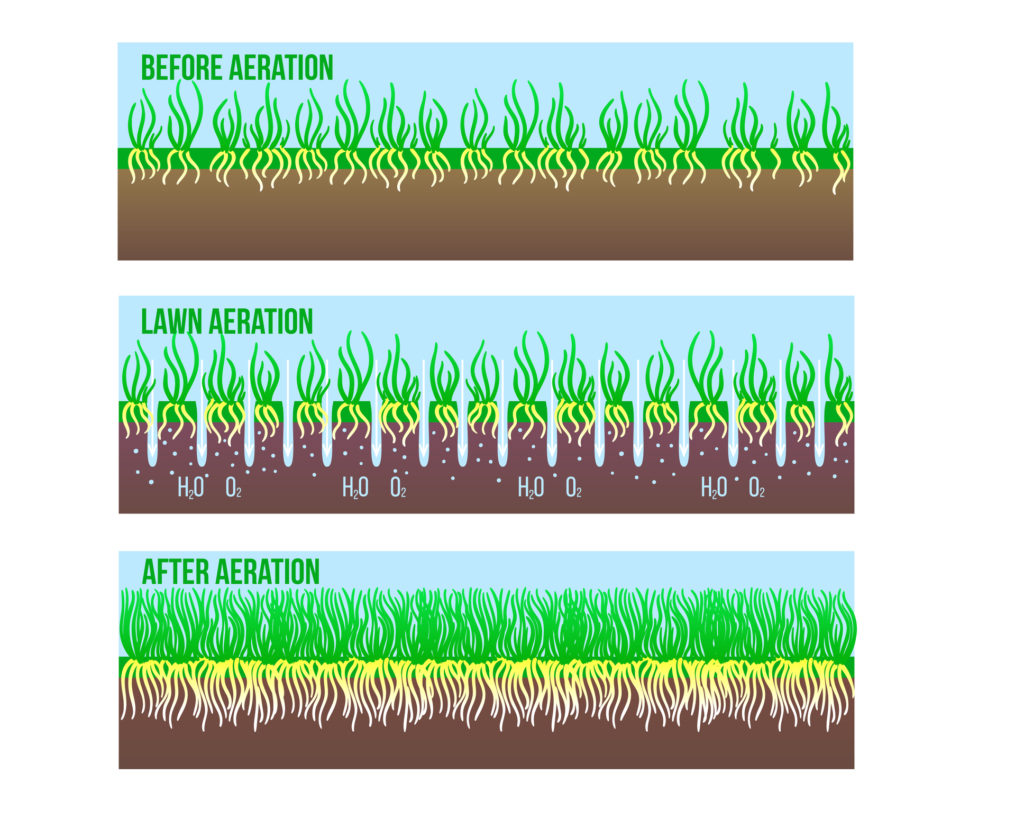 After and Before Lawn Aeration stage illustration. Gardening long grass lawn care, landscaping service. Vector stock design isolated on white